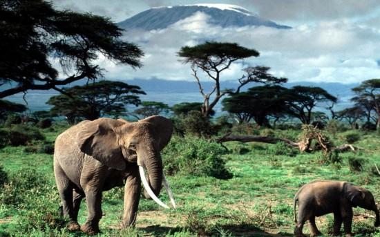 Танзания - мир дикой природы и девственной красоты