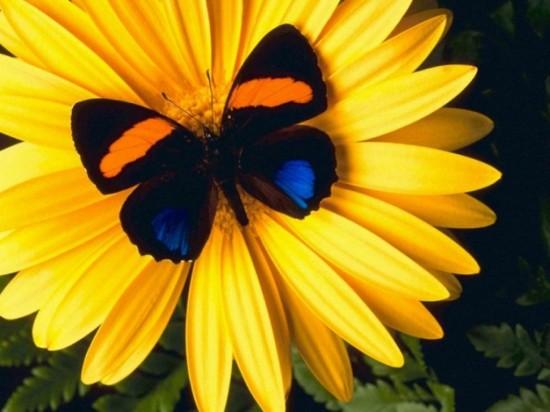 Как различать бабочек3