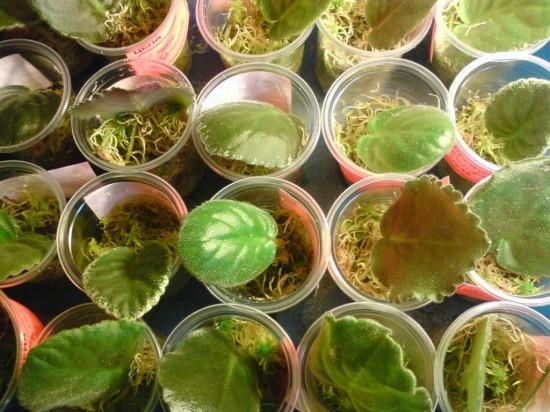 Разведение экзотических растений в квартирах3