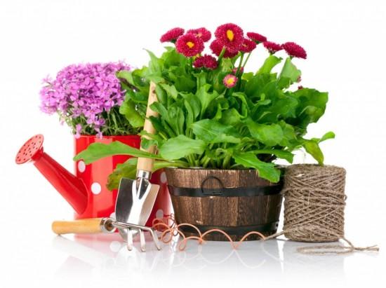 Садоводство - приятная зарядка для ума