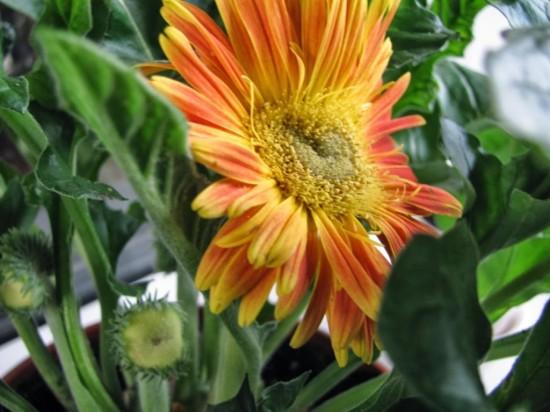 Выращивание цветов – удовольствие и радость
