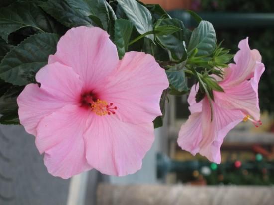 Выращивание цветов – удовольствие и радость2